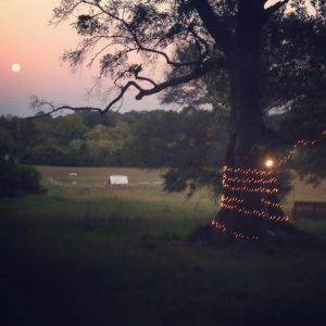pasture and moonrise