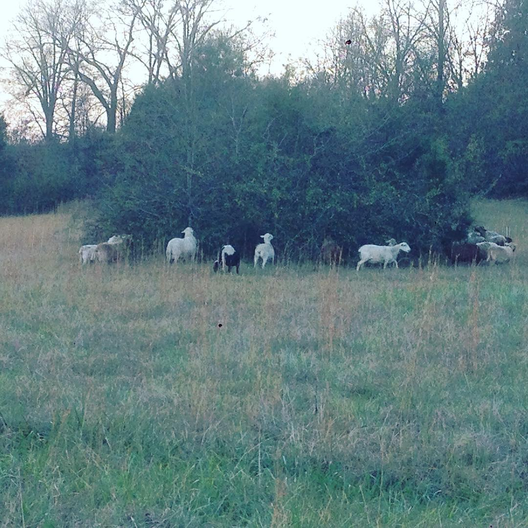 Other Meats Marble Creek Farmstead