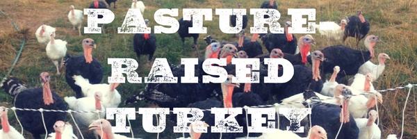 pasture-raised-turkeys